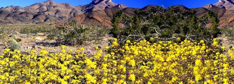 flowers-mountains.jpg