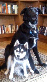 dogs kia and cyrus photo