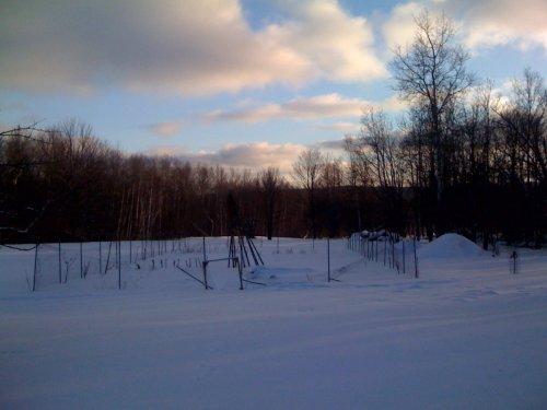 winter garden image