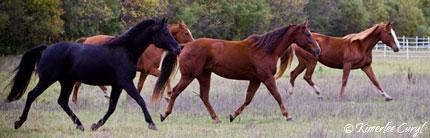 Nita Jo's horses