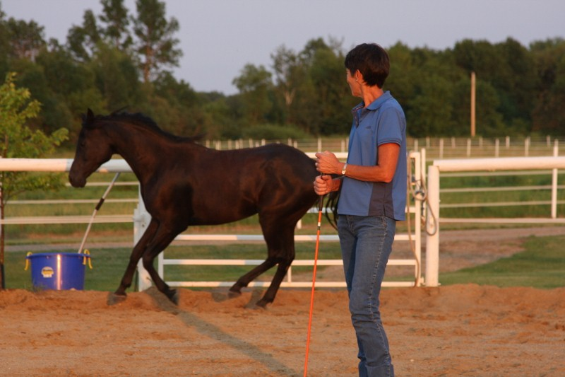 Jet at liberty in 75' round pen