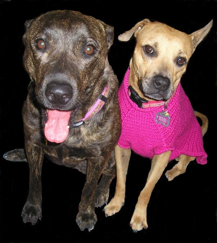 Randy Kinkel's Dogs Mitz and Matz