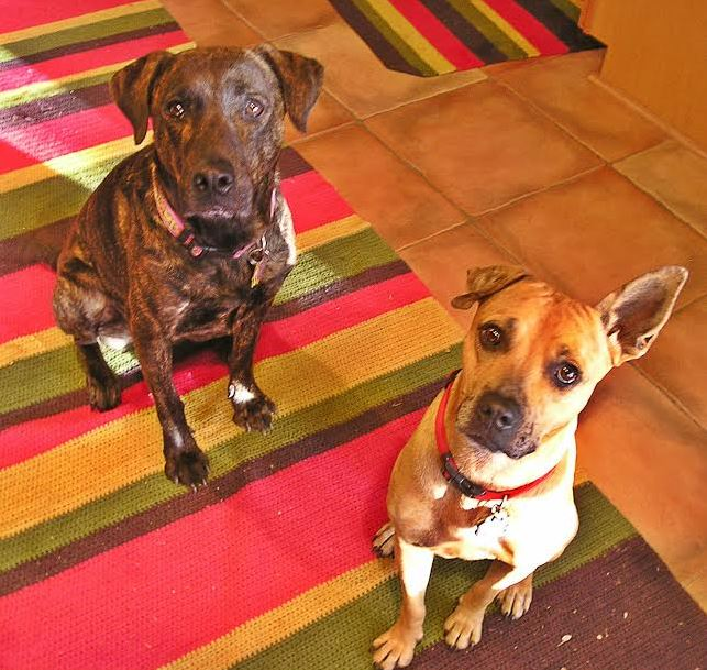 Randy Kinkel's Dogs Mitz and Matz