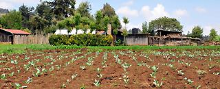 image of farm land