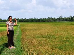 target - rice field