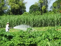 Target- watering veggies