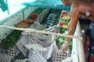 Target - Tabitha crops June 2012