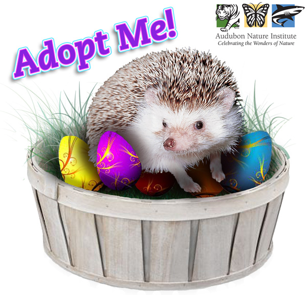 Adopt An Animal for Easter!