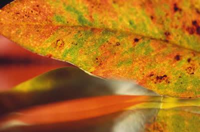 leaf-macro.jpg