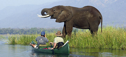 bumi hills elephant