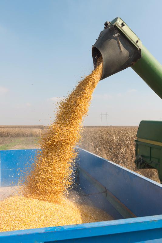 combine unloading corn