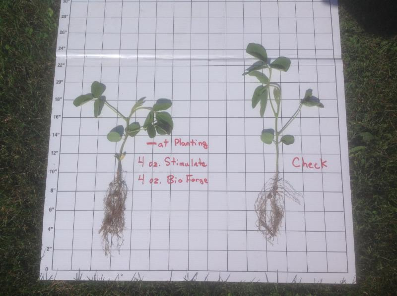 Soybean comparison