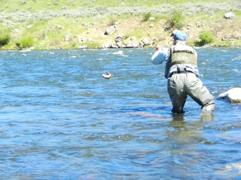 News from blue ribbon flies for Lake mathews fishing