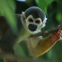 Monkey, Patricio Robles Gil