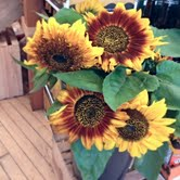 Flowers Harvest Home