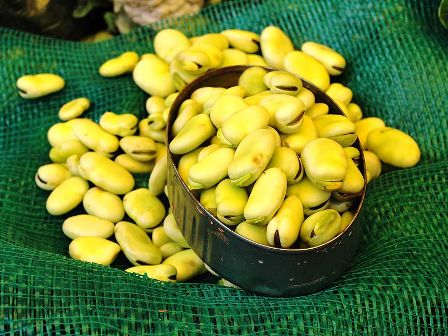 Fresh Fava Beans by Thelmadatter via Wikimedia