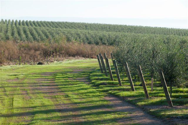 Artois - AM 2011 Harvest