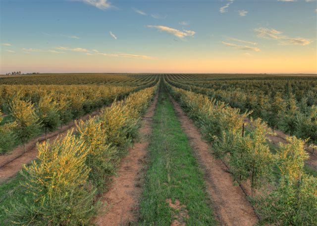 Artois Olive Groves