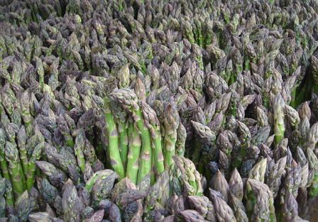 Asparagus courtesy of Wikimedia Commons