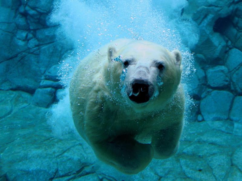 Polar Swim 1