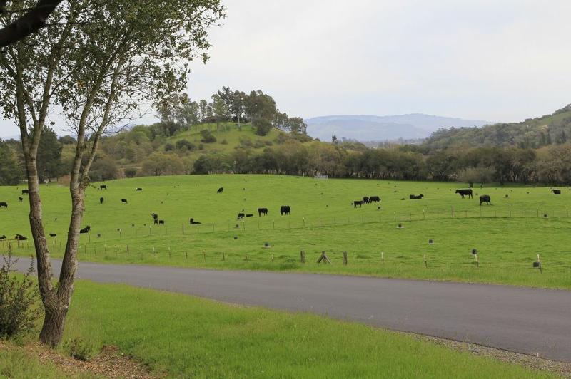 Shone Farm Field