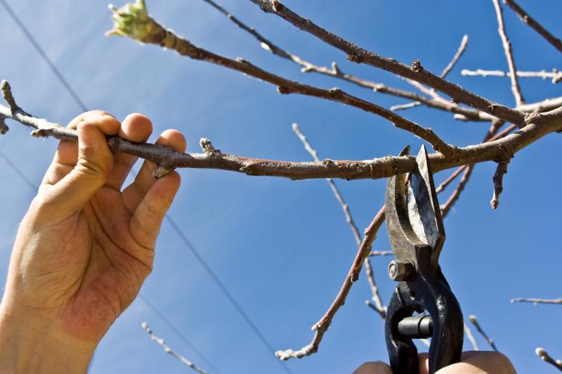 Branch Cuts