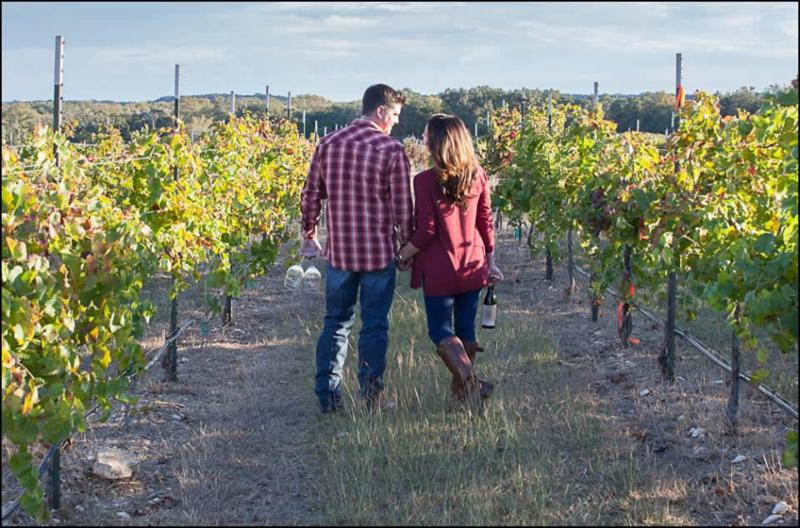 couple walking in a vinyard of grapes