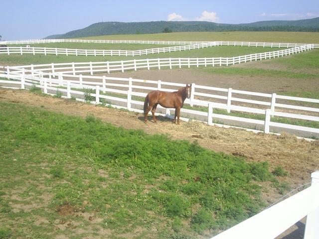 horse in paddocks