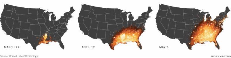 eBird heat mapping