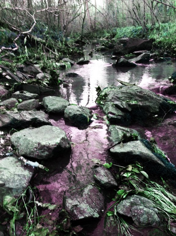 stinking creek