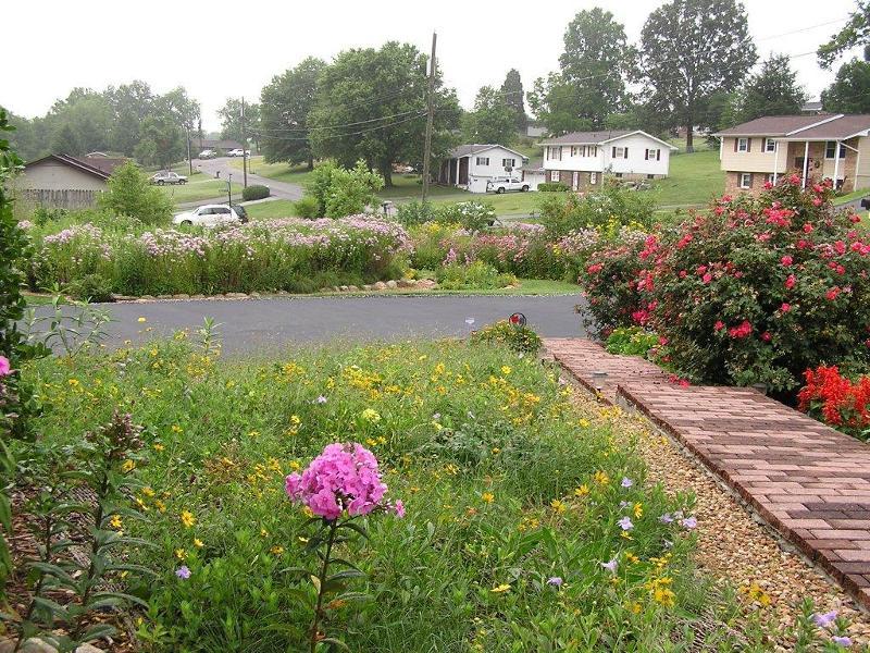 Rain garden - front porch view