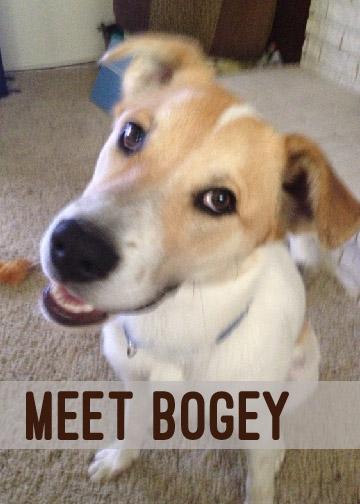 Meet Bogey