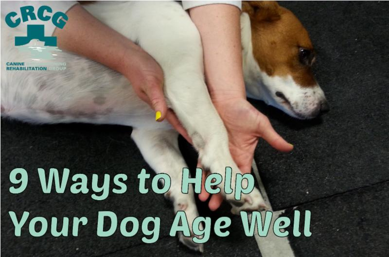 9 Ways to Help Your Dog Age Well