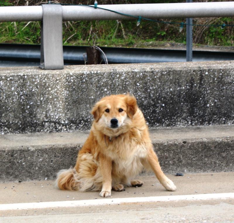 bridgedog