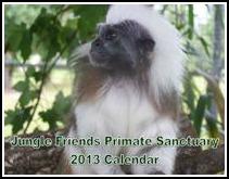 2013 Monkey Calendar