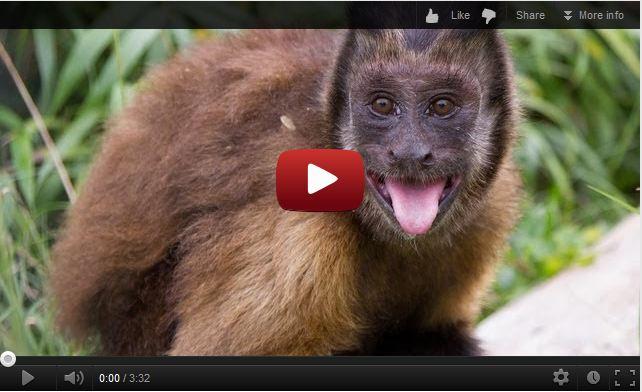 Monkey Minutes Episode 1