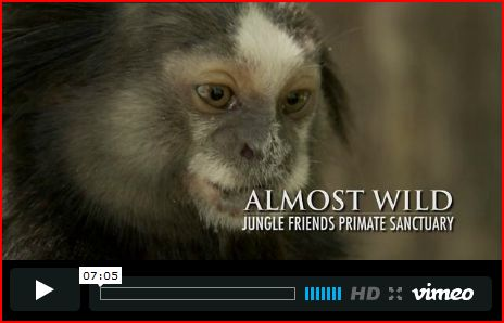 Video Almost Wild