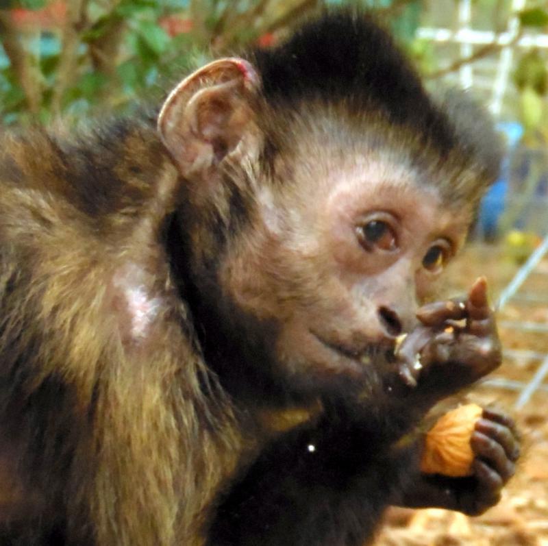 Wendell eating walnut