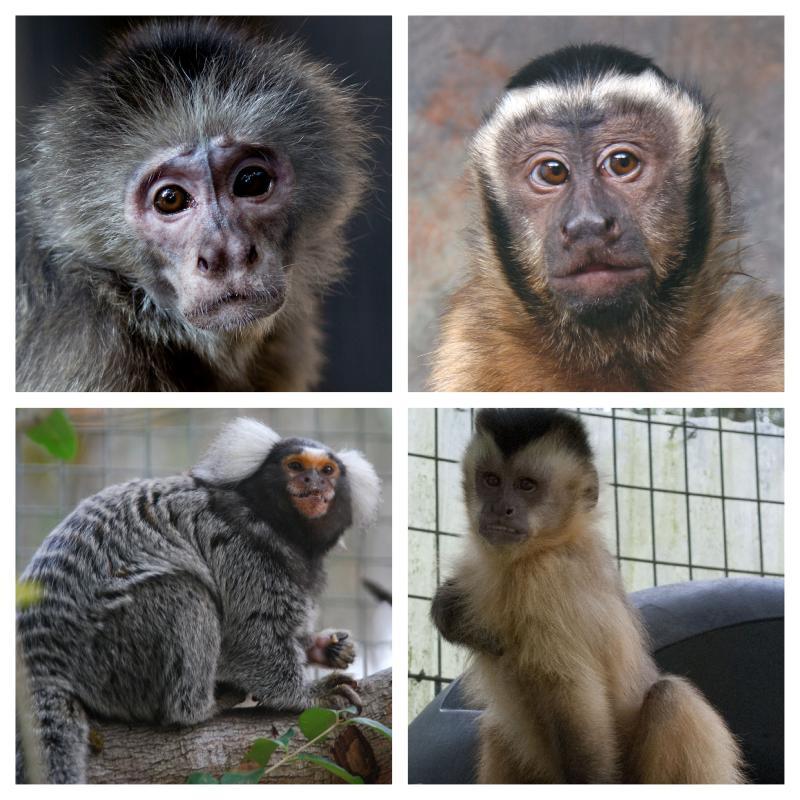 April featured monkeys