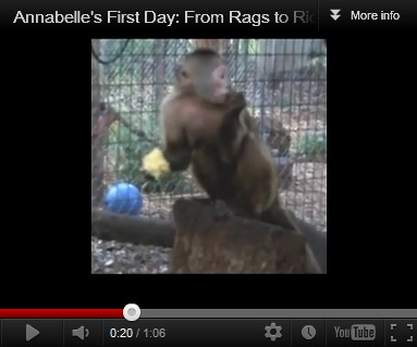 Annabelle's First Day Video