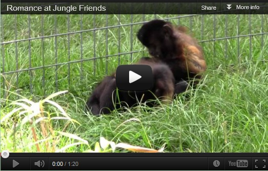 Romance at Jungle Friends video