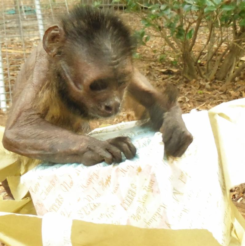 Puchi opening gift