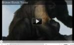 http://www.junglefriends.org/baby-monkey-links-resources.shtml