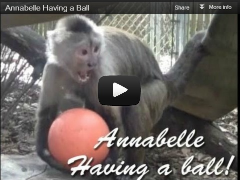 Annabelle having a ball