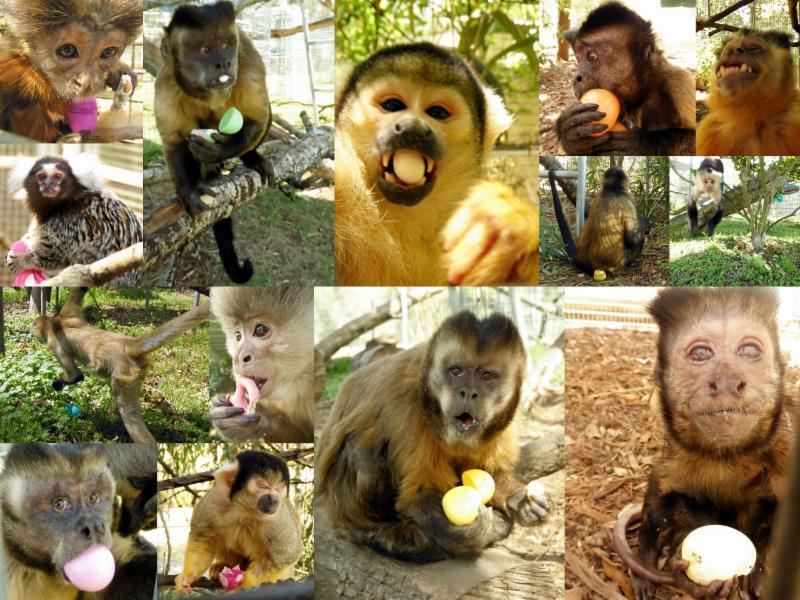 Jungle Friends monkeys 2015 Easter Egg Hunt
