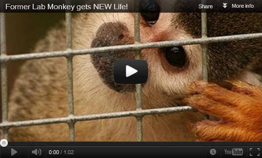 Former Lab Monkey Gets New Life Video