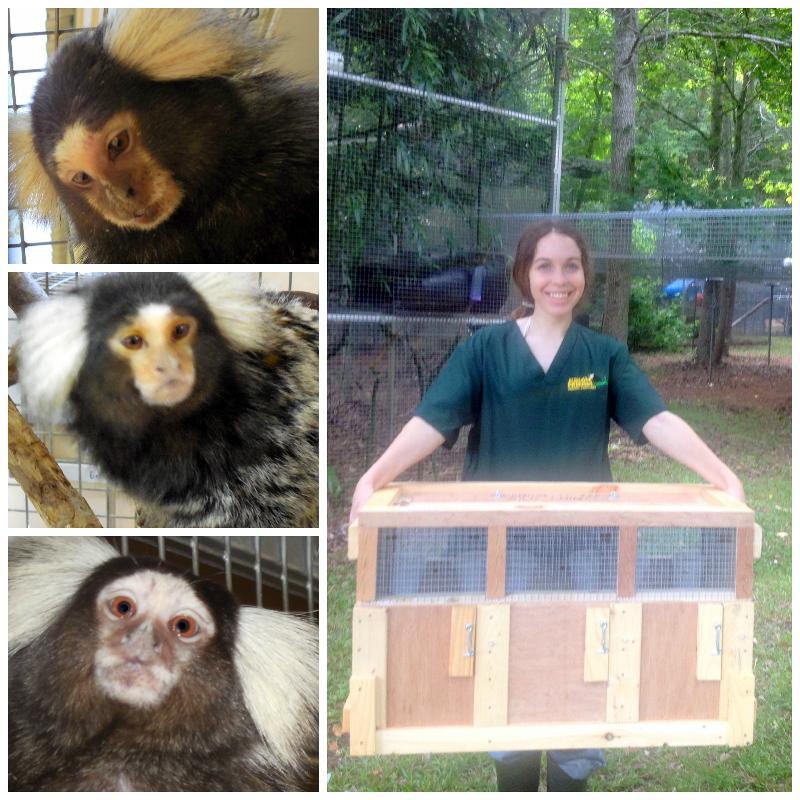 Lindsay and three marmosets