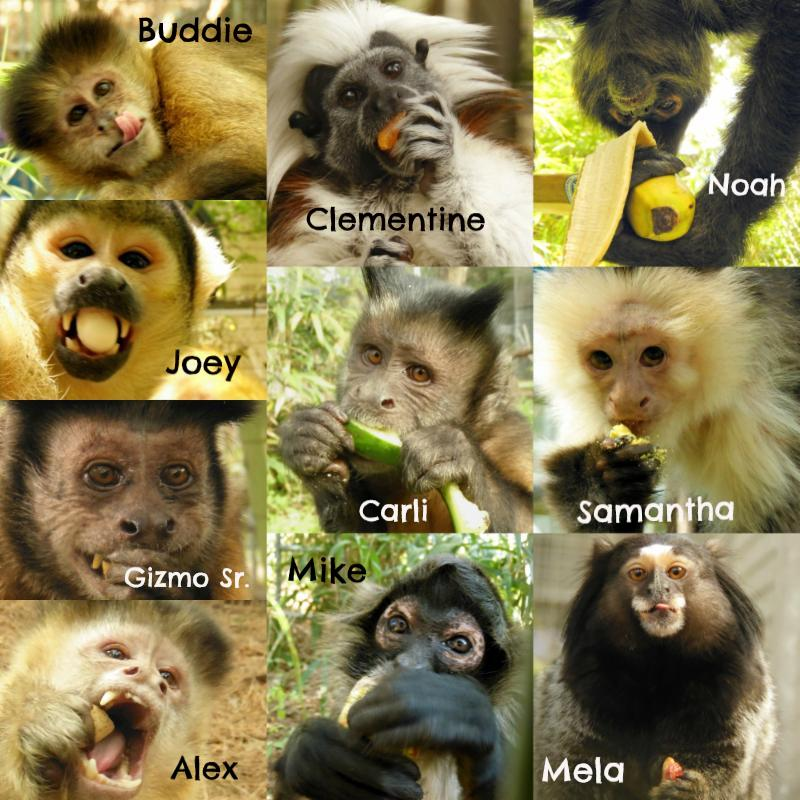 Monkey Thanksgiving collage