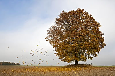 windy-tree-leaves.jpg