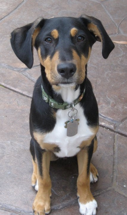 Missing Dog Neumann